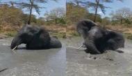 Baby Elephant Enjoy Bath: पानी में मस्ती करते दिखा अनाथ नन्हा हाथी, वीडियो में देखें कैसे हुआ लोटपोट