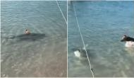 पानी में शार्क को देखते ही बहादुर कुत्ते ने कर दिया हमला, सोशल मीडिया पर वायरल हुआ वीडियो