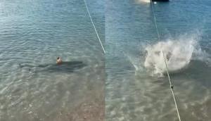 शार्क को देखते ही कुत्ते ने लगा दी समुद्र में छलांग, वीडियो में देखें आगे हुआ क्या?
