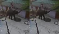 गांव में घुस आया भूखा हाथी फिर जमकर मचाया तांडव, वीडियो में देखें कैसा किया हाल