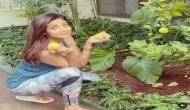 Shilpa Shetty shares 'food for thought' as she picks out lemons from kitchen garden