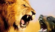 मालिक को बचाने के लिए तीन शेरों से भिड़ गया कुत्ता, दुम दबाकर भागे मैदान छोड़कर