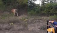 खुली जीप में बैठकर जंगल सफारी का घूम रहे थे पर्यटक, तभी बाघ ने कर दिया हमला और फिर...