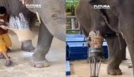 अपाहिज हाथी की इस शख्स ने ऐसे की मदद, वीडियो देखकर करेंगे तारीफ