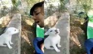 गाना गा रहे युवक को देखकर छोटा कुत्ता करने लगा कुछ ऐसा, वीडियो देख रह जाएंगे दंग