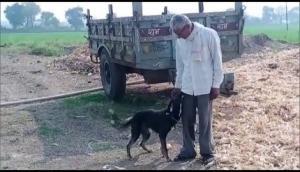 Madhya Pradesh: Farmer wills part of his property to pet dog
