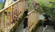 डॉगी को देखकर पास आ गए दो बंदर, वीडियो में देखें फिर कैसे करने लगे दोस्तों जैसी शरारत