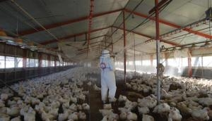 Bird Flu: 10 precautionary measures issued by FSSAI on how to eat chicken, egg