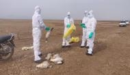 Bird Flu: 2,403 birds dead in Himachal, number likely to increase
