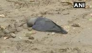 दिल्ली : मयूर विहार के पार्क में 200 कौओं की मौत, बर्ड फ्लू के डर से नहीं बिक रहे चिकन और अंडे