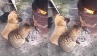 सर्दी में हो गई कुत्ते और बिल्ली की यारी, वीडियो में देखें कैसे आग के पास बैठकर छुड़ाई ठंड