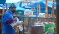 Bird Flu: कोरोना वायरस से ज्यादा खतरनाक है बर्ड फ्लू, 60 प्रतिशत मरीजों की हो जाती है मौत