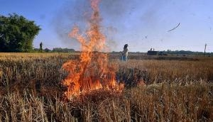 SC to Centre: Submit report on your plans to control stubble burning