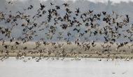 Bird Flu : 11 राज्यों तक फैला बर्ड फ्लू, झारखंड ने 2,500 नमूनों को जांच के लिए भेजा