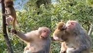 पेड़ पर चढ़ने की कोशिश कर रहा था बंदर का बच्चा, वीडियो में देखें मां ने पैर पकड़कर खींचा से हुआ क्या