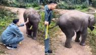 हाथी के बच्चे को गन्ना खिलाकर छूने की कोशिश कर रहा था युवक, वीडियो में देखें कैसे मारी नन्हे गजराज ने लात