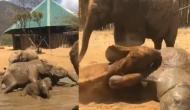 कीचड़ में हाथी और बच्चों के बीच ऐसे हुई कुस्ती, वीडियो में देखें किसने मारी बाजी