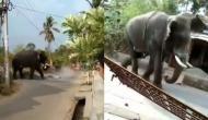 हाथी को आया गुस्सा तो गांव में घुसकर ऐसे मचाया तांडव, वीडियो में देखें एक झटके में पलट दी कार