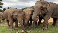 हाथी ने काटा अपने जन्मदिन पर केक, वीडियो में देखें कैसे पूरे झुंड ने प्यार से खाया