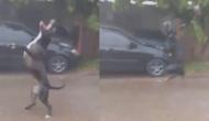 बारिश की बूंदें देखकर पागल हो गया कुत्ता! वीडियो में देखें कैसे की हैरान कर देने वाली हरकत