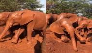 कीचड़ को देखकर खुशी से झूम उठा हाथियों का झुंड़, वीडियो में देखें कैसे की जमकर मस्ती
