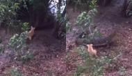मगरमच्छ का हो गया पिल्ले से आमना-सामना, वीडियो में देखें कैसे जान बचाकर भागा पानी का राजा