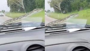 चलती कार के बोनट पर आ गया जहरीला सांप, वीडियो में देखें आगे हुआ क्या