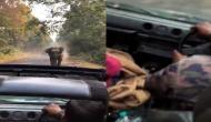 सड़क पर जा रही थी पर्यटकों की कार, तभी सामने से आ गया हाथी, वीडियो में देखें गुस्साए गजराज ने फिर किया क्या
