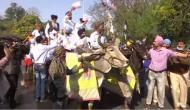 Fuel price hike: SAD MLAs ride to Punjab Assembly on bullock carts