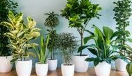 घर में गलती से भी न लगाएं ये पौधे, परिवार पर टूट पड़ता है मुसीबतों का पहाड़