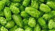 अजब: 1 लाख रुपये है इस सब्जी की कीमत, बिहार के इस किसान ने उगाकर दुनियाभर में मचाया तहलका