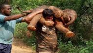 दलदल में फंस गया हाथी का नवजात बच्चा, वीडियो में देखें अपने कंधे पर उठाकर कैसे ले गया वनरक्षक