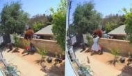 पालतू कुत्तों को बचाने के लिए भालू से भिड़ गई महिला, वीडियो में देखें फिर हुआ क्या