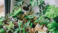 घर में नहीं लगाए चाहिए ये पौधे, परिवार को उठाना पड़ सकता है भारी नुकसान
