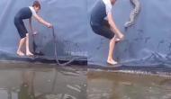 पानी में तैर रहे सांप को पकड़ने की कोशिश कर रहा था शख्स, तभी पीछे से बचाने को आ गया अजगर और फिर...