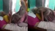 लंगूर को रोजाना खाना खिलाती थी बुजुर्ग महिला, वीडियो में देखें जब बीमार हुईं तो लंंगूूर ने किया क्या