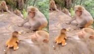 बंदर के पास आकर शैतानी कर रहा था बच्चा तो ऐसा मारा मुक्का, वीडियो में देखें मां ने कैसे लगाया गले