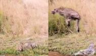 झील किनारे पानी पी रहा था तेंदुआ तभी कर दिया मगरमच्छ ने हमला, वीडियो में देखें फिर हुआ क्या