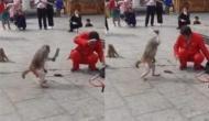 बंदर को आया गुस्सा तो मदारी पर कर दिया चाकू से हमला, वीडियो में देखें फिर हुआ क्या
