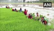 UP: Paddy growers in Aligarh face problems due to delayed monsoon, seek govt help