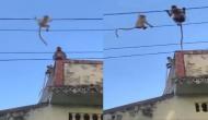 बिजली की लाइन पर चढ़ गया लंगूर का बच्चा, वीडियो में देखें जब नहीं उतर पाया तो हुआ क्या