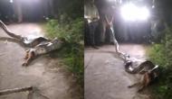 कुत्ते को जिंदा निगल गया अजगर, वीडियो में देखें फिर आगे हुआ क्या