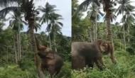 पेड़ से फल तोड़ने में नाकाम हो गया हाथी तो किया ये काम, वीडियो देखकर रह जाएंगे दंग
