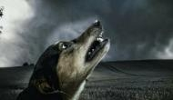आधी रात में घर के बाहर इसलिए रोते हैं कुत्ते, आपमें दहशत पैदा कर देगी इसकी वजह
