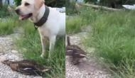 तीतर का शिकार करने की कोशिश कर रहा था कुत्ता, वीडियो में देखें जान बचाने के लिए अपनाई ये तरकीत