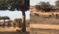 पेड़ के नीचे आया हिरण तभी ऊपर से तेंदुआ ने लगा दी छलांग, वीडियो में देखें फिर हुआ क्या