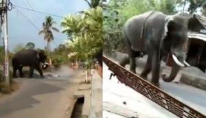 गांव में घुसकर गुस्साए हाथी ने मचाया तांडव, वीडियो में देखें एक ही झटके में कैसे पलट दी कार