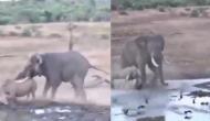 हाथी और गैंडे में हो गई भयानक लड़ाई, वीडियो में देखें किसने दी किसे मात