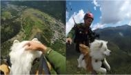 Paragliding video of 3-year-old dog with hooman will give you goosebumps!