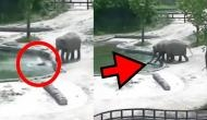 Baby elephant falls into pond; rescue video will make you fall in love with jumbo family